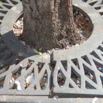 griglie-alberi-fondi - 1024px
